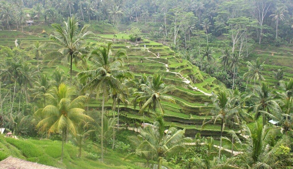arrozal de Tegalalang