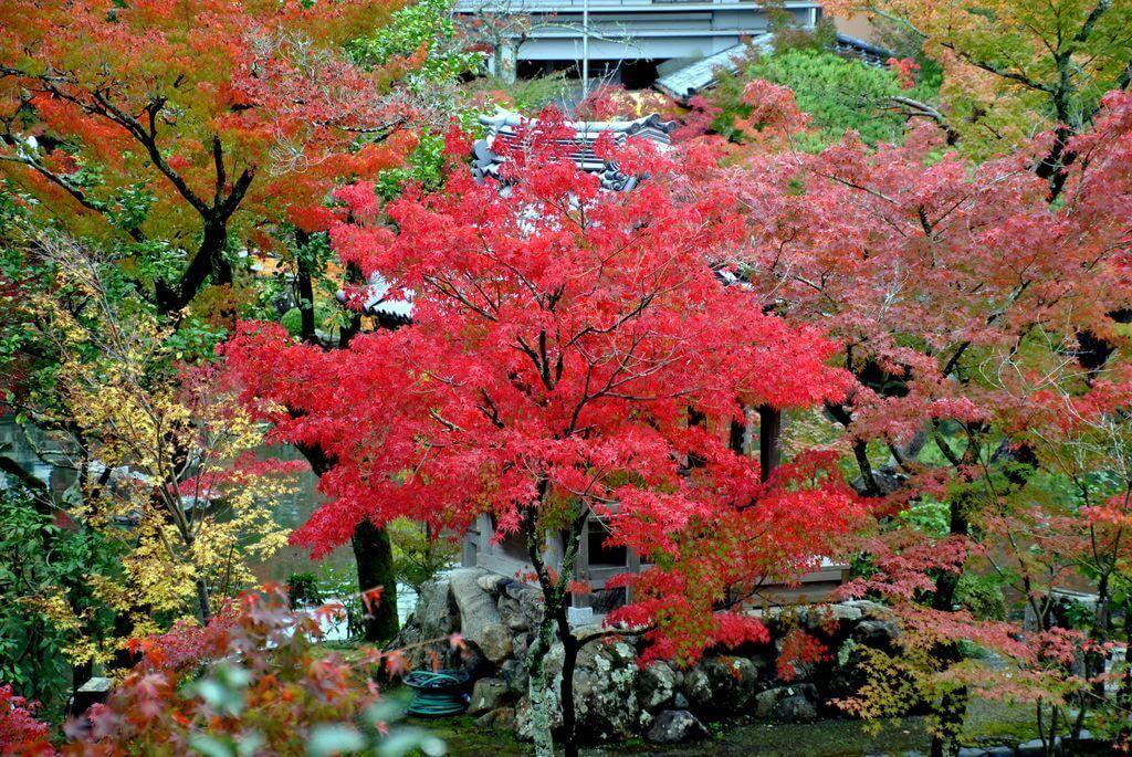 Eikando, este de Kioto