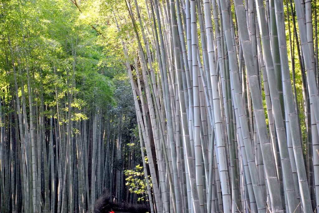 Bosque de Arashiyama