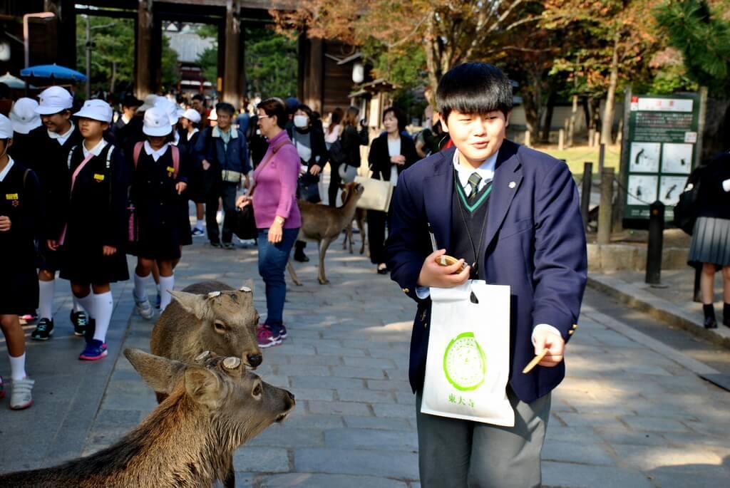 ciervos sika en Nara